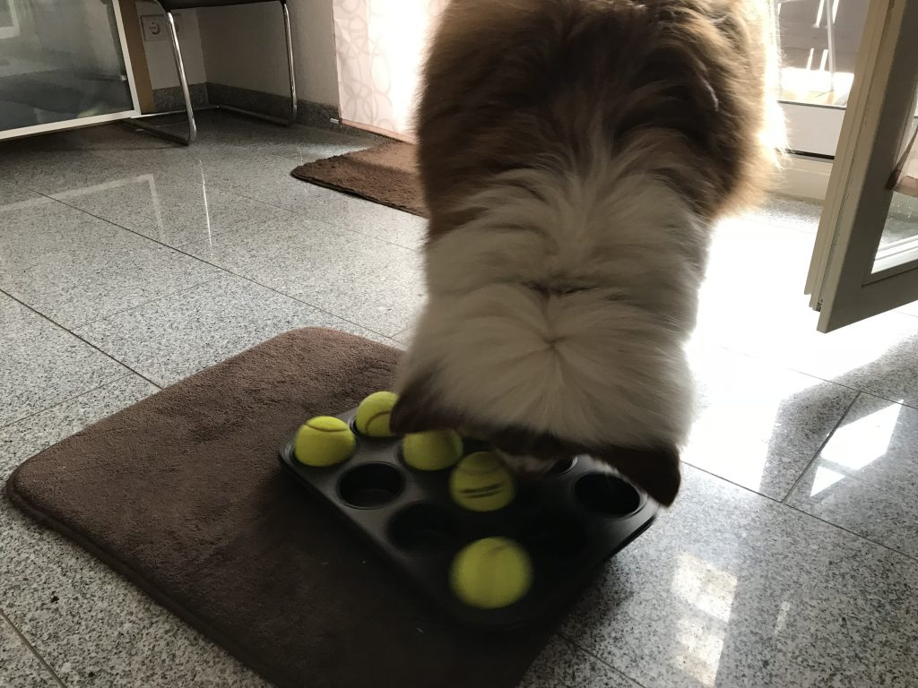 Muffinbackform Suchspiel für Hunde